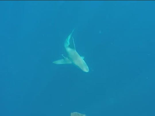 Randy Fales was OK after encountering two sharks in