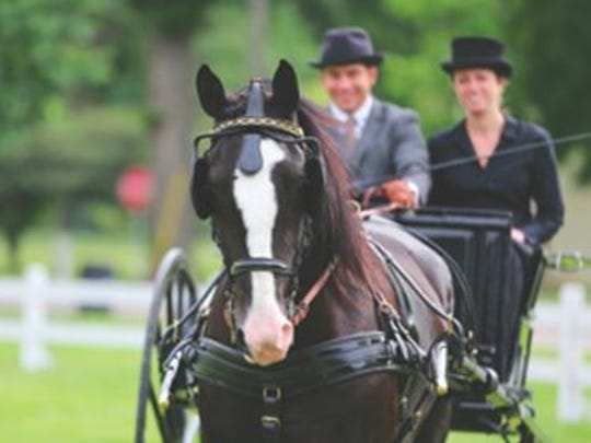 The annual gathering of mid-west horses, carriages,
