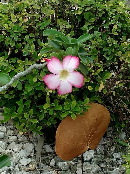 rotary flower