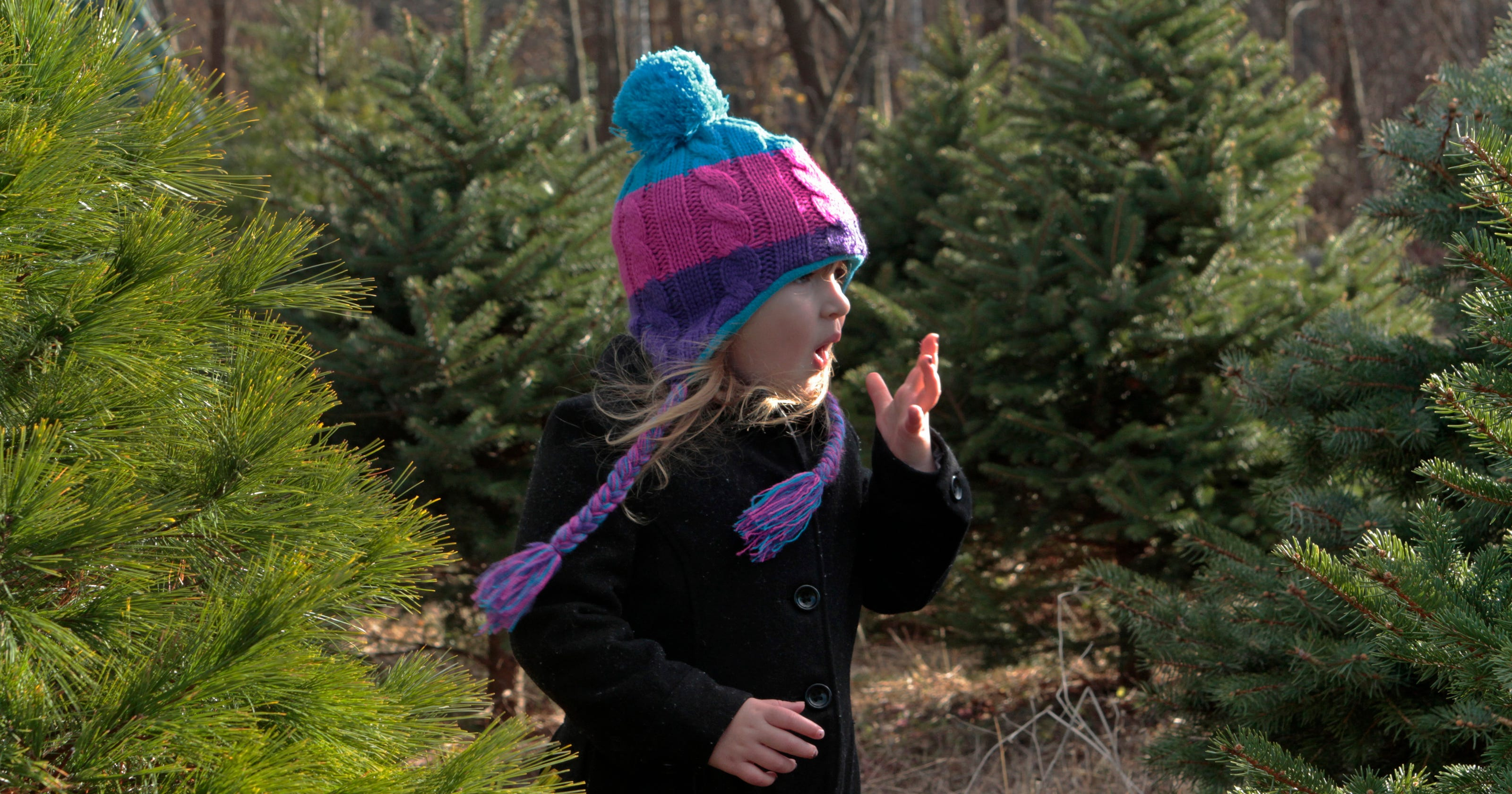Lincroft Christmas Tree Farm Offers Tips On Cutting Your