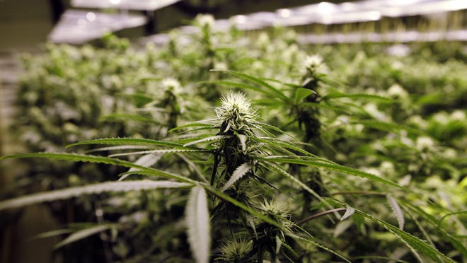 Michigan voters legalized medical marijuana in 2010 but legislators still struggle to agree on terms for licensing and regulating medical marijuana dispensaries.