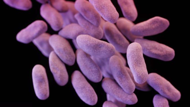 E coli cells