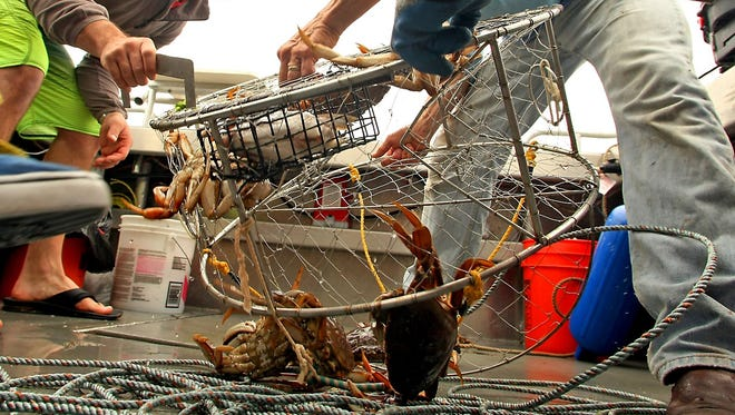 Washington State Department of Fish and Wildlife officers and Washington State Ferries are reminding crabbers to keep track of their gear and keep it out of ferry lanes, where the lines can get tangled with propellers and shafts.