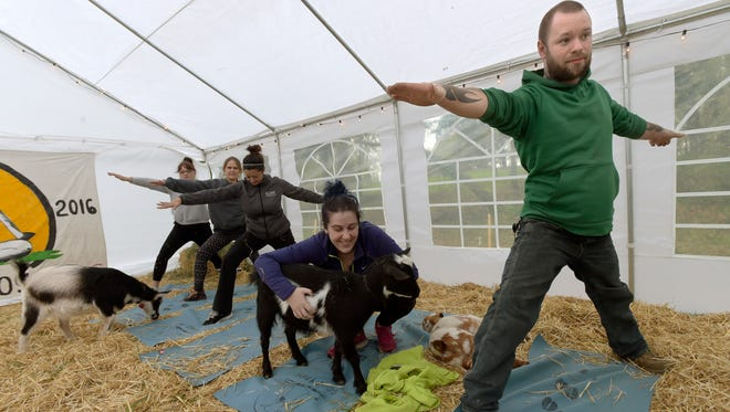 In this Wednesday, March 29, 2017 photo, while the rest of her classmates hold a yoga pose Jessie Ryan, of Portland, pauses to spend some time with Quincy the goat during Goat Yaga class in Corvallis.