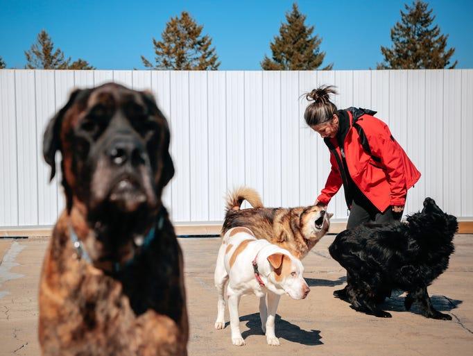 Silver Muzzle Cottage owner Kim Skarritt pets Kia while