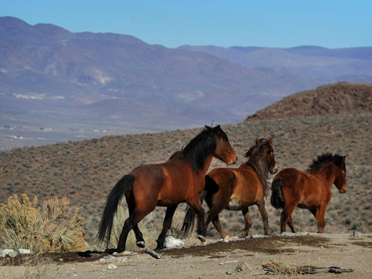 Near Dayton: Wild horses are seen during a BLM tour in 2015.