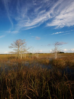 Everglades National Park  at Shark Valley.
