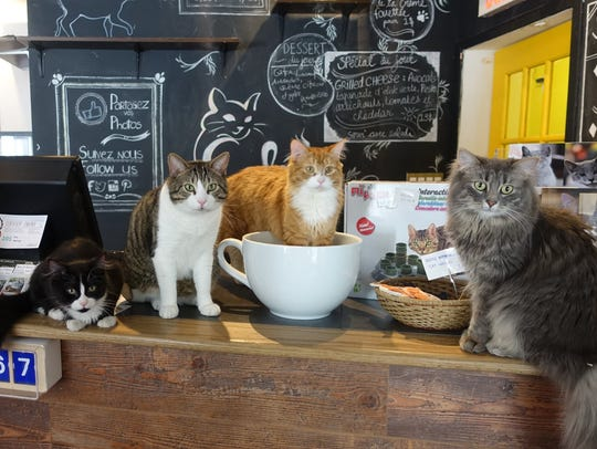 Plans are still in the works to open Catfeine, a cat cafe, in Murfreesboro sometime in summer 2018.