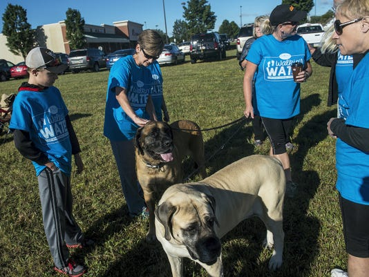 Dog owner Kathy Dutterer, center, fuels up with coffee as her American mastiffs Ryley, foreground, and Axel, get some attention from other walkers during the Walkin' for Water event Sept. 13.