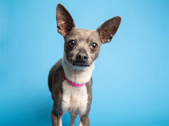 Rhubarb is available for adoption at 9226 N. 13th Ave.