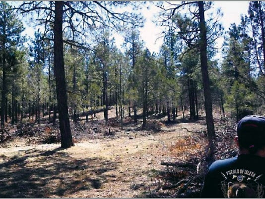 Courtesy Photo   A member of the Isleta Pueblo assesses Tribal Forest land as part of the Joint Chiefs Landscape Restoration Project.