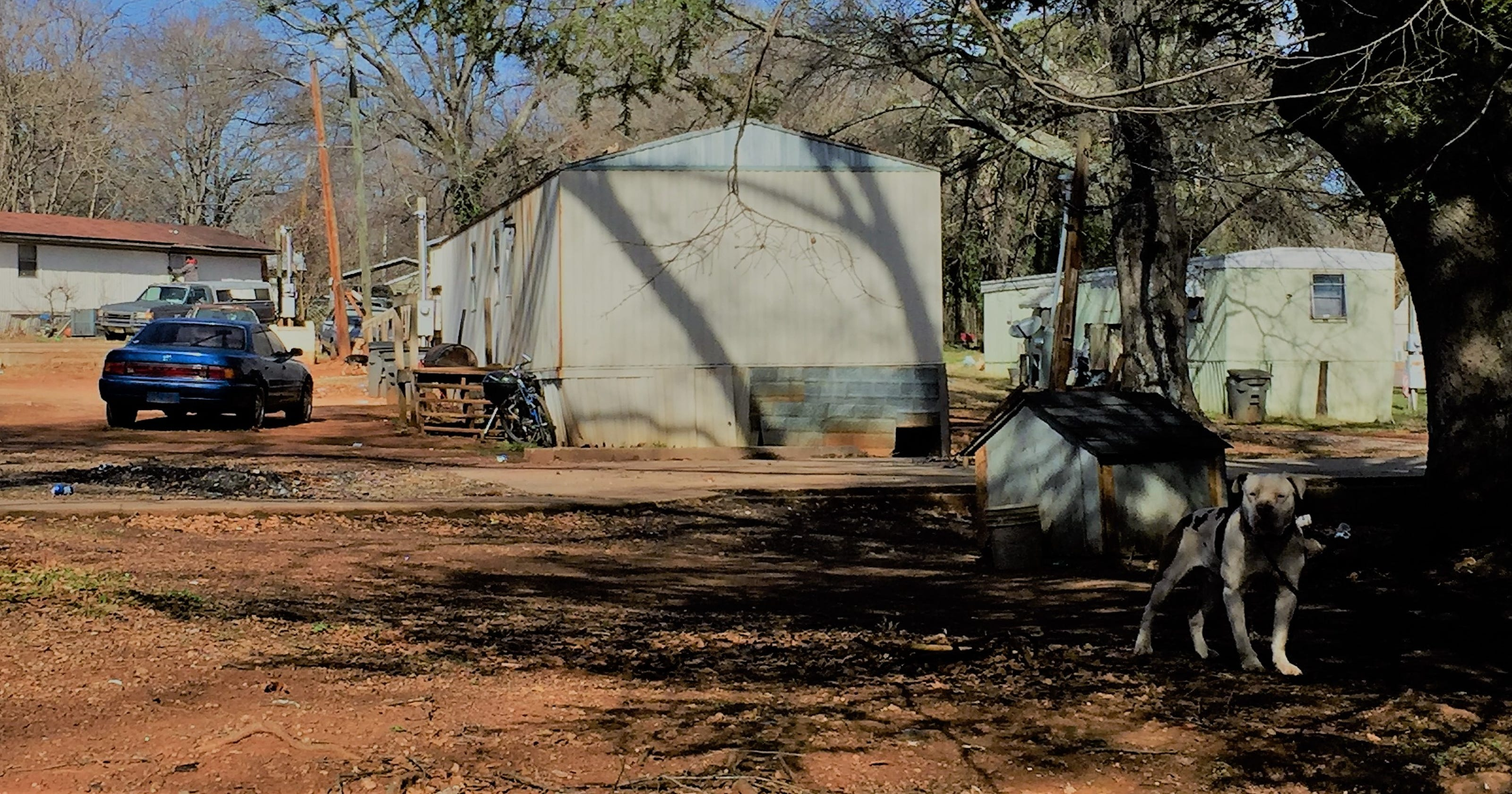 Greenville County restricts dog tethering, outlaws chains