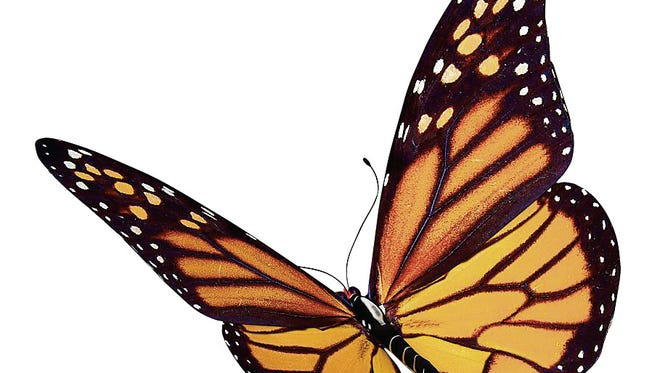Butterflies will be the topic of a discussion at Mosquito Hill July 12.