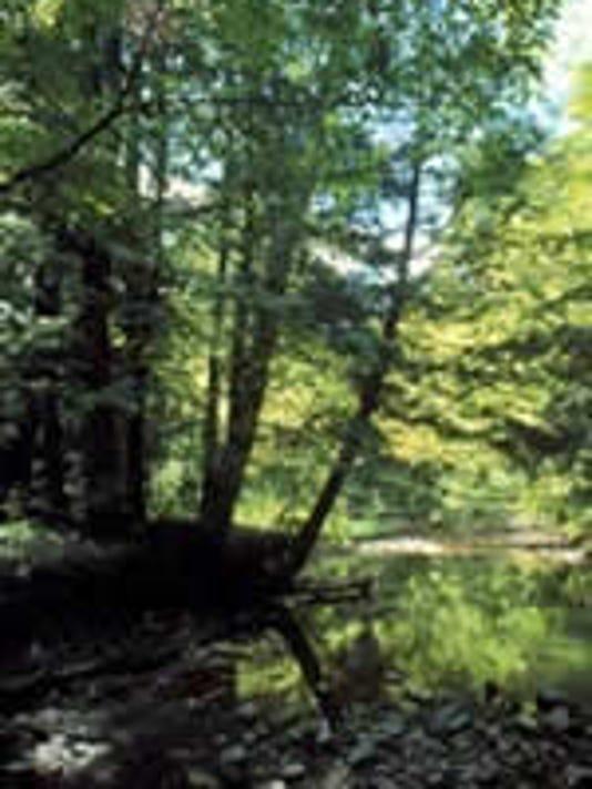 Miller Stewardship Forest