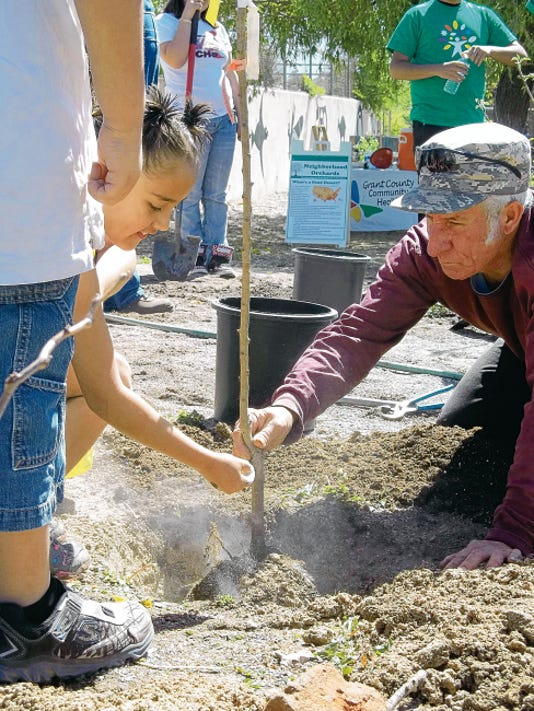 Student and volunteer, Abcde Zavala, 7, sprinkles bone meal onto the roots of an apricot tree as arborist, Cheyenne Thomas holds the trunk steady during the planting of the 6th Street School Neighborhood Orchard. Students selected the varieties fruit trees planted in the orchard, which is a welcome addition to the school´s existing school garden. Courtesy Photo