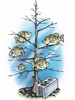Sinking used Christmas trees in ponds to create fish habitat is one way landowners might use them after the holidays. There are also many ways to recycle Christmas trees for those who do not have a pond nearby.