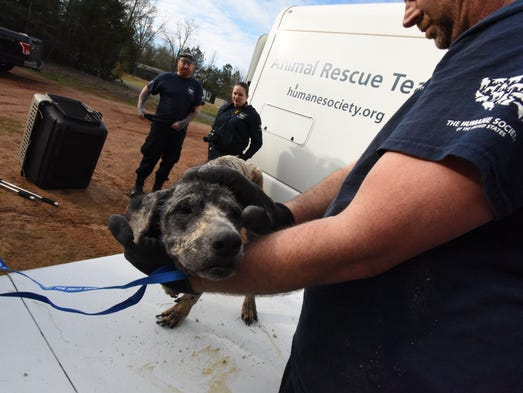 Four abused dogs were rescued in Claiborne Parish Feb.