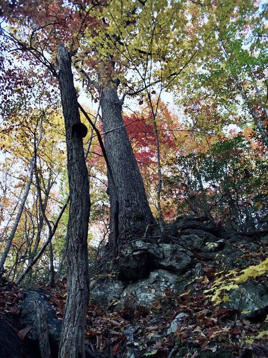 636377071748234929-Foothills-Conservancy-Bob-s-Creek-Natural-Area-2.jpg