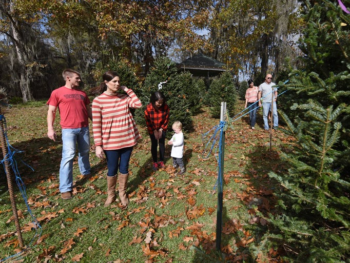 Christmas Tree Shopping in Flora | Gallery