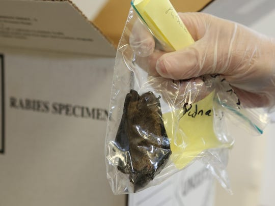 Michael Luke, a public health sanitarian for the Putnam County Health Department, packages a bat that was captured and killed by a resident.