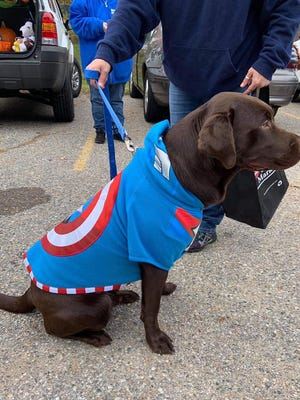 Dogs are dressed up for the Harbor Humane 2019 Howl-o-Ween event. This year, the outdoor event will take place Saturday, Oct. 24, at The Shops at Westshore.