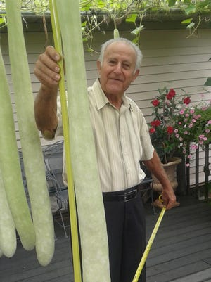 Benito Zagaroli checks out one of the long, hanging squashes on his deck.