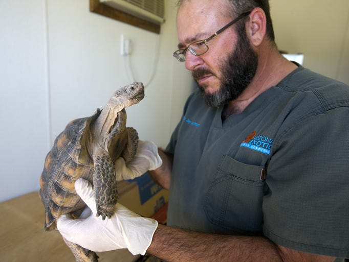 Dr. Jay Johnson, a veterinarian with the Arizona Exotic