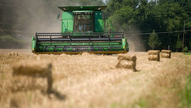 A combine cuts a 25-acre field of wheat on land in Mansfield farmed by Ralph Wainwright of R&R Wainwright Farms.
