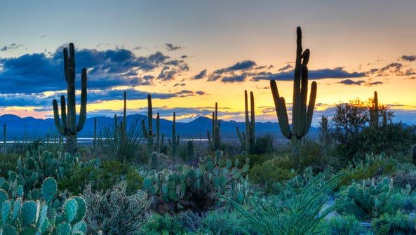 Saguaro National Park.