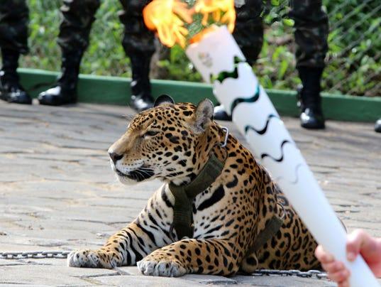 2016-6-21-jaguar