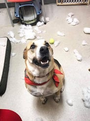 """""""The toy exploded. Yep, That's exactly what happened."""""""