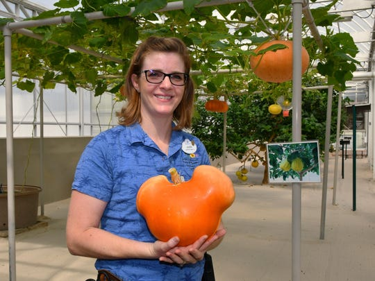 Laura Kleiss, greenhouse operations manager, shows a pumkin grown in a form that makes it grow into the shape of Mickey Mouse. Behind the scenes in the greenhouse and pavilion at Epcot's The Land, where fruits, vegetables, and other plants are grown, as well as fish farms to help supply Disney restaurants.