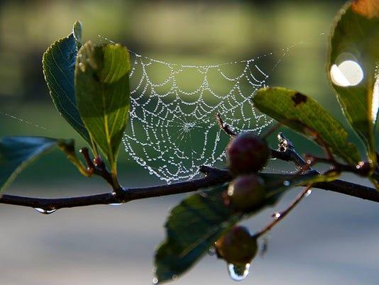 636682218577449095-spider-web-for-Ripples.jpg
