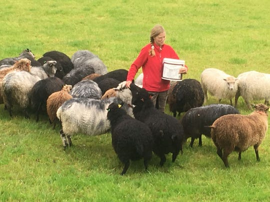 The Vikings were farmers, and you can experience life on a Norwegian farm on a Viking shore excursion