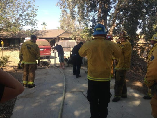 Sixty-one sheepdogs and sheepdog-mixes have been rescued from a house fire in Riverside Sunday.