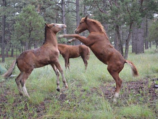 wild-horses-