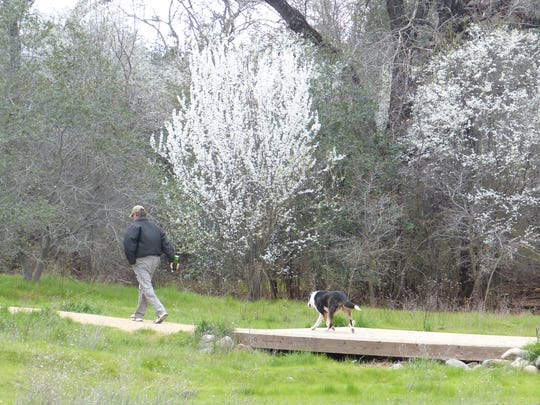 It was a nice day Sunday to take a walk at the Turtle Bay East Open Area in Redding