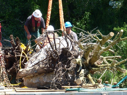 Crews prepare to put a salmon shelter made up of a tree stump and boulder into the Sacramento River on Friday.