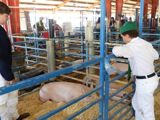 Wyatt Coburn, 12, looks at a pig named Schmidt that