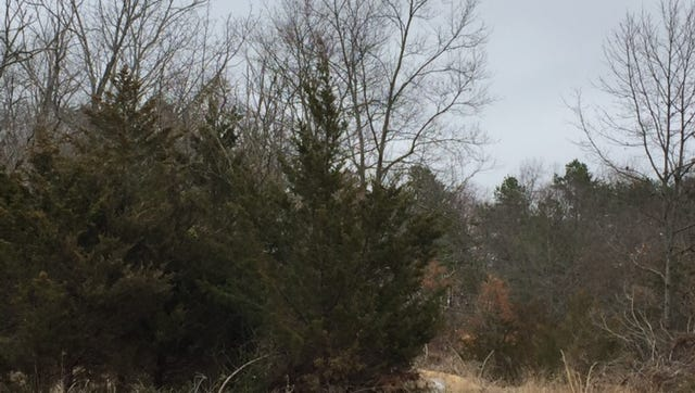 This wooded land off Oak Avenue could become the site of a four-story hotel and restaurant.