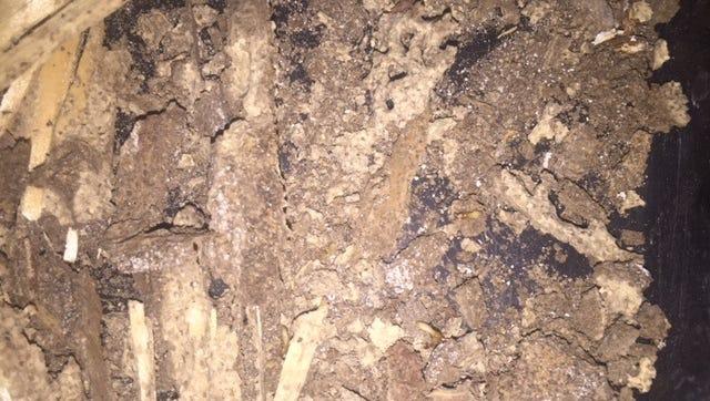 Formosan termite damage at a home in Haughton.