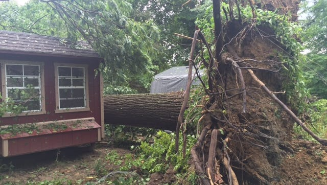 James Vance said his chicken coop was spared when a 70-foot poplar tree was uprooted Tuesday night.