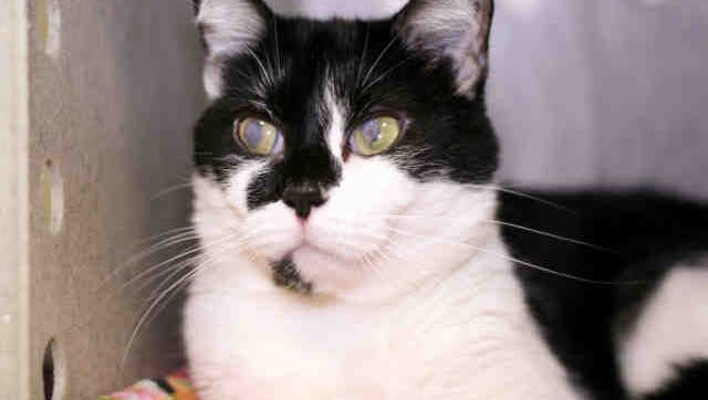 No cats allowed in apartment!  Dot couldn't go with her former owners and needs a new one.