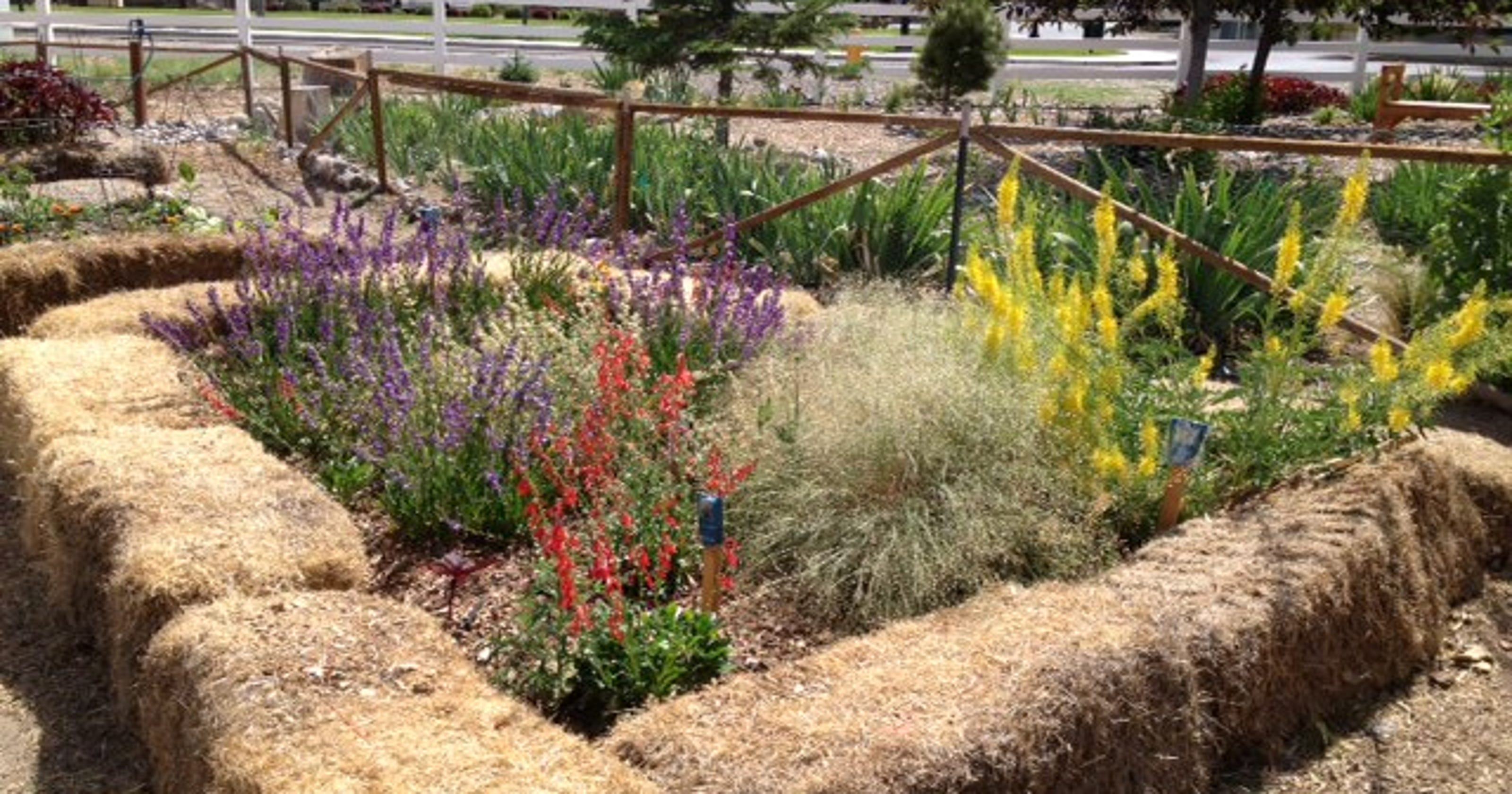 Plant wildflowers now to attract bees, butterflies later