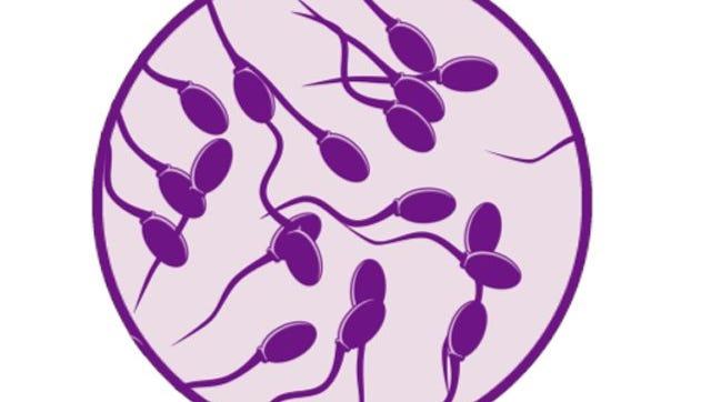 Sperm illustration