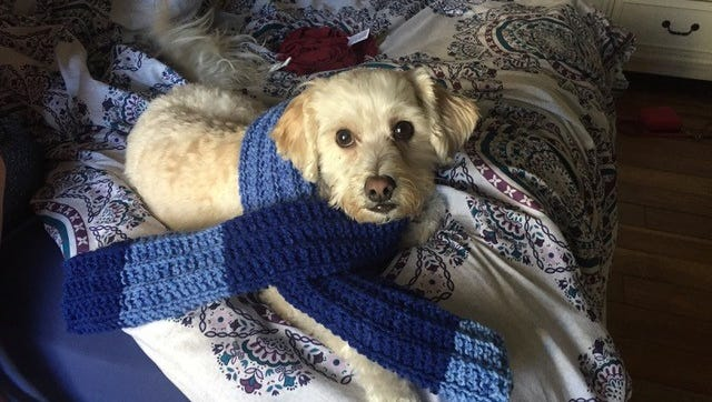 Max was a 7-year-old dog who had been with his family since he was a puppy. Amanda Wohland, his owner, found him dead in a mobile pet grooming van on Jan. 10, 2018.