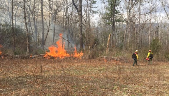 A 100-acre prescribed burn is now underway in the Pink