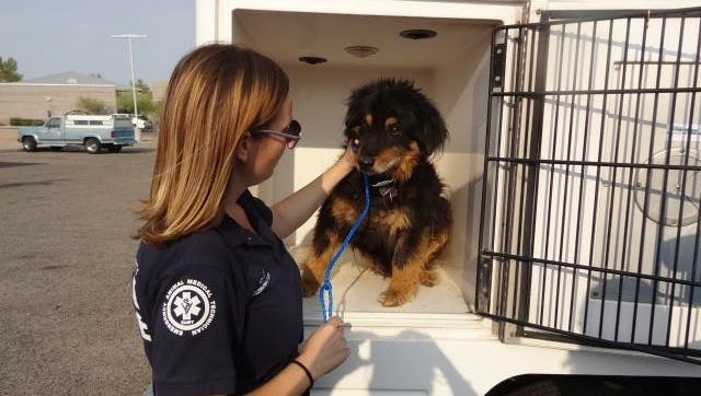 The Arizona Humane Society has the ability to treat, rescue and offer shelter to animals in disaster zones.