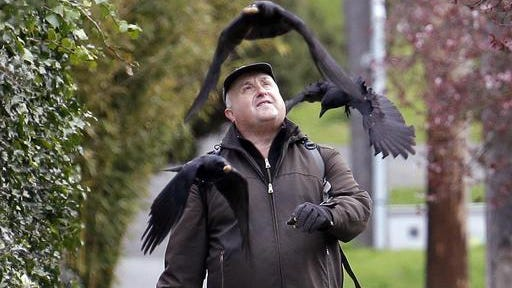 Darryl Dyer tosses peanuts to crows as he walks his usual route Friday in Seattle. For nearly every step of his almost 12-mile hike, Dyer says flocks of crows follow him, signaling each other, because they all know that he's the guy with the peanuts. Scientists for years have known that crows have great memories, that they can recognize a human face, their behavior and can pass that information onto their offspring.