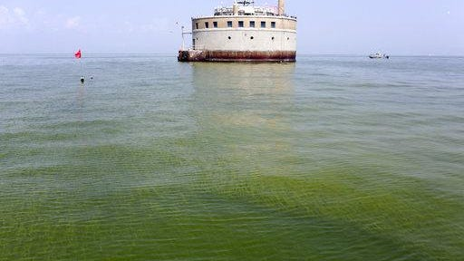 In this Aug. 3, 2014, file photo, the water intake crib for the city of Toledo, Ohio, is surrounded by an algae bloom on Lake Erie, about 2.5 miles off the shore of Curtice, Ohio.